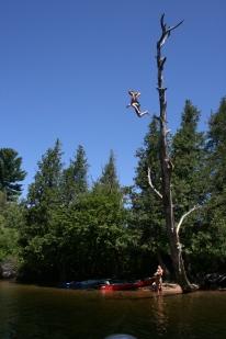 jumping tree